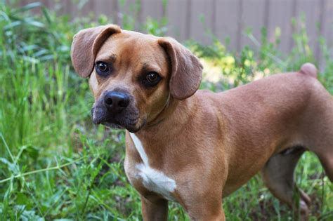 Media Stars! May 23-29 - Seattle Humane: Companion Connections
