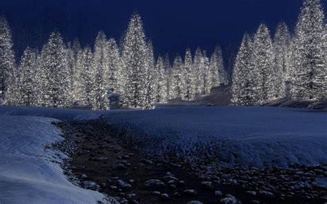 Decorated pine trees wallpaper | nature and landscape