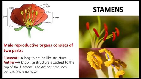 Plant Life - CBSE NCERT Science - YouTube