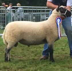 Clun Forest Sheep Breeders Society